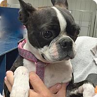 Adopt A Pet :: Cocoa - Hibbing, MN