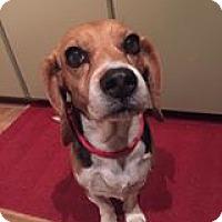 Adopt A Pet :: Bella - Rathdrum, ID