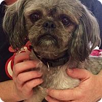 Adopt A Pet :: Smokey - Oswego, IL