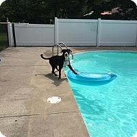 Adopt A Pet :: Lucy - Courtesy Listing - Sparta, NJ
