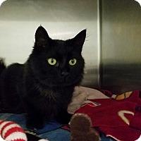 Adopt A Pet :: Lukie - Elyria, OH