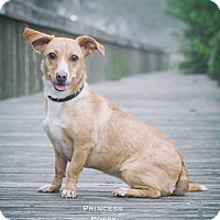 Adopt A Pet :: Princess Poppy - Webster, TX
