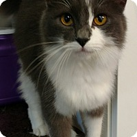 Adopt A Pet :: Clyde - Shelbyville, KY