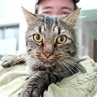 Adopt A Pet :: Jeremiah - Warwick, RI