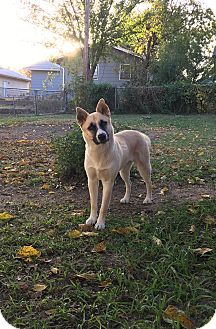German Shepherd Dog Mix Dog for adoption in Manhattan, Kansas - Bella