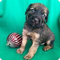 Adopt A Pet :: Zambia - Alpharetta, GA