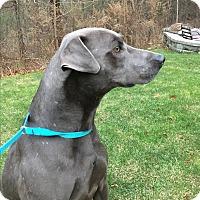 Adopt A Pet :: Loggr - Harmony, Glocester, RI