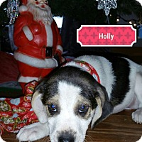 Adopt A Pet :: Holly - Lake In The Hills, IL