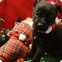 Adopt A Pet :: Coal - Vacaville, CA