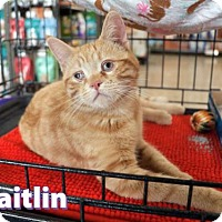 Adopt A Pet :: Kaitlyn - Mission Viejo, CA