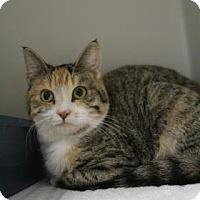 Calico Cat for adoption in Lincolnton, North Carolina - Poinsettia