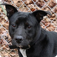 Adopt A Pet :: Cody - Washington, DC