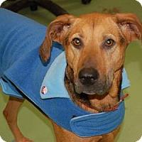 Adopt A Pet :: Bonnie - Newport, KY
