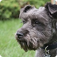 Adopt A Pet :: Victory - Rockaway, NJ