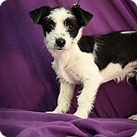 Adopt A Pet :: Waldo - Broomfield, CO