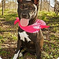 Adopt A Pet :: Jersey - Converse, TX