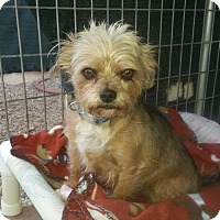 Adopt A Pet :: Farley - Acton, CA