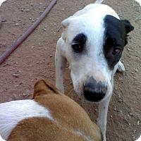 Adopt A Pet :: Bitsy - Wichita Falls, TX