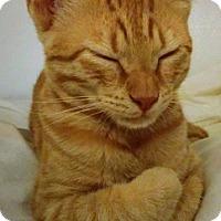 Adopt A Pet :: Sunny - Piscataway, NJ