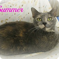 Adopt A Pet :: Summer - Melbourne, KY