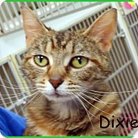 Adopt A Pet :: Dixie - Warren, PA