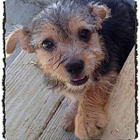 Adopt A Pet :: Ragnar - Johnson City, TX