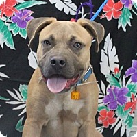 Adopt A Pet :: BUSTER - Gustine, CA