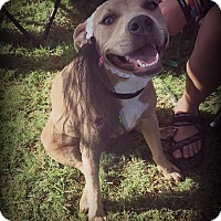 Adopt A Pet :: Keera(Free to good home) - Cleveland, OK