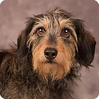 Adopt A Pet :: Teo - Salem, OR