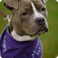 Adopt A Pet :: Raleigh - Milwaukee, WI