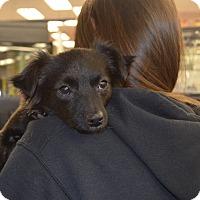 Adopt A Pet :: Emma - Lodi, CA