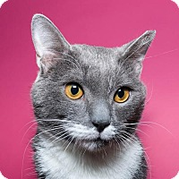 Adopt A Pet :: Morton - Jersey City, NJ