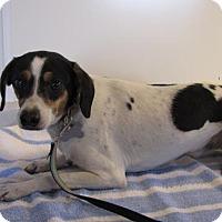 Adopt A Pet :: Bones - Mountain Home, AR