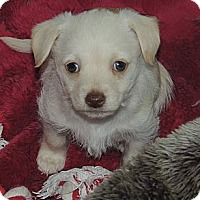Adopt A Pet :: Princess - La Habra Heights, CA
