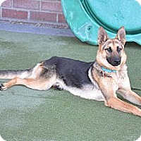 Adopt A Pet :: Maya..I love dogs! - Redondo Beach, CA