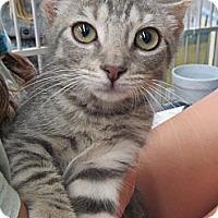Adopt A Pet :: Skeeter - Riverhead, NY