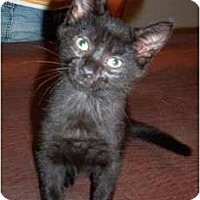 Adopt A Pet :: Teasel - Troy, OH