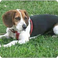 Adopt A Pet :: Avery - Novi, MI