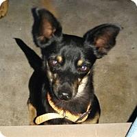 Adopt A Pet :: Wyatt - Windermere, FL