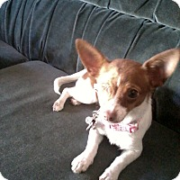 Adopt A Pet :: Dawna-Joy - Los Angeles, CA