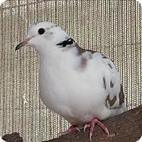 Adopt A Pet :: Beatrice - Monterey, CA