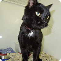 Adopt A Pet :: Noisy - Medina, OH