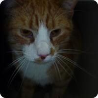 Adopt A Pet :: Tito - Hamburg, NY