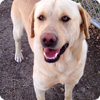 Adopt A Pet :: ARCHIE - the PERFECT dog - Stamford, CT