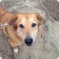 Adopt A Pet :: Sara Leigh - Alpharetta, GA