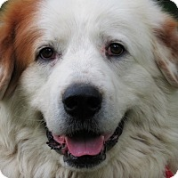 Adopt A Pet :: Dexter - Kyle, TX
