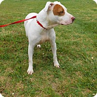 Adopt A Pet :: Daisy Duke-022702j - Tupelo, MS