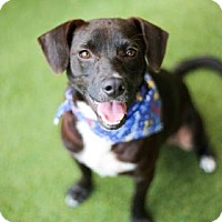 Adopt A Pet :: Hunter - Lakeland, FL