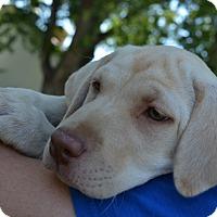 Adopt A Pet :: Dawn - Ogden, UT