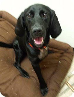 Labrador Retriever Mix Dog for adoption in Union City, Tennessee - Riley